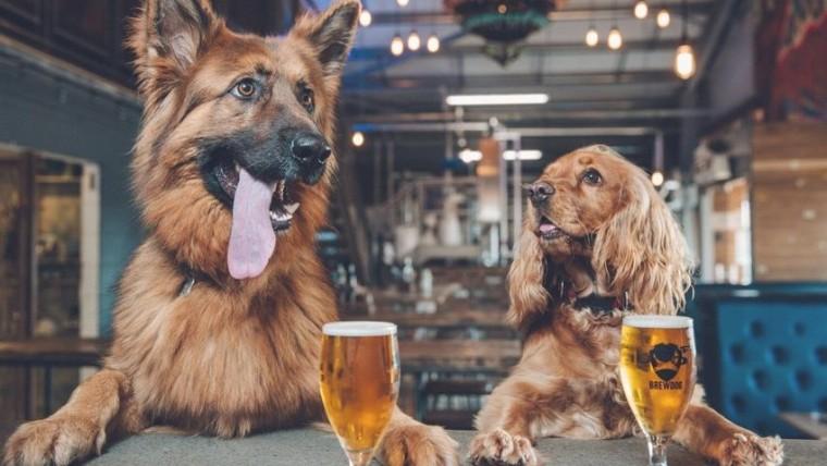 Localuri Pet Friendly În Cluj – Unde Sa Ieși În Oraș Cu Patrupedul Tău
